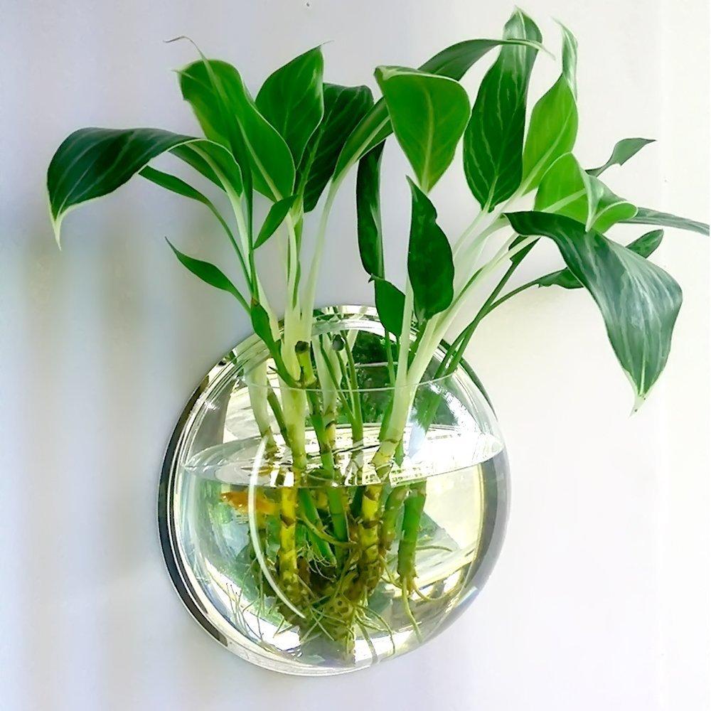 Jarrón/pecera colgante de acrílico de Candora, burbuja ideal como maceta para plantas o como acuarios: Amazon.es: Hogar