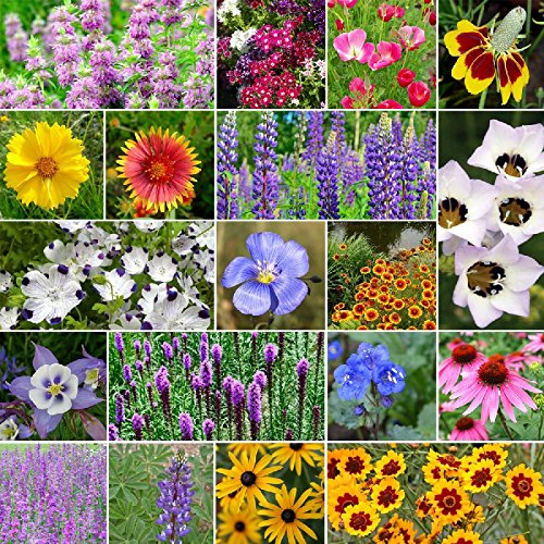 North American Native Wildflower Seed Mix - 10 Pounds, Mixed by Eden Brothers (Image #1)