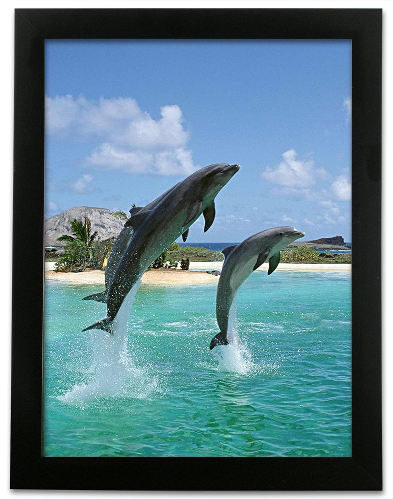 Uncategorized Dolphin Images To Print amazon com 3d dolphin print ocean and tropical scene 3 dimensional holographic lenticular animated black framed poster wall art
