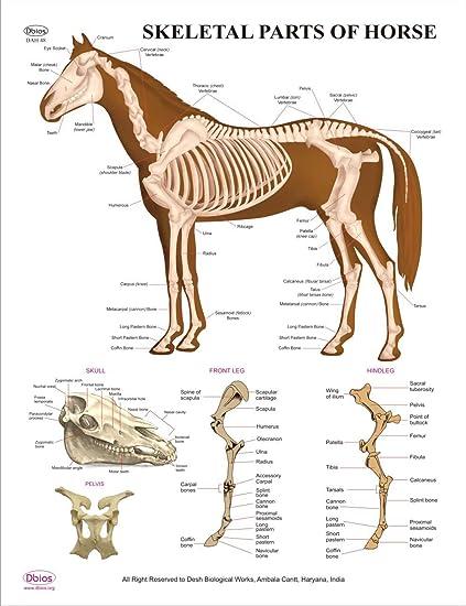 Dbios educativos digitales impresas partes del esqueleto de los ...