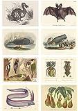複製 博物画 オフセット印刷 A4サイズ 8枚組
