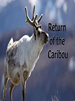 Wild Discovery Return of the Caribou