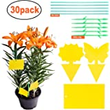 30 Pack Sticky Trap, Fruit Fly and Fungus Gnat Trap Killer Indoor and Outdoor, Protect The Plant,Non-Toxic and Odorless…
