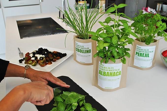 Garden Pocket - Kit de Cultivo de ENELDO - Bolsa Maceta: Amazon.es ...