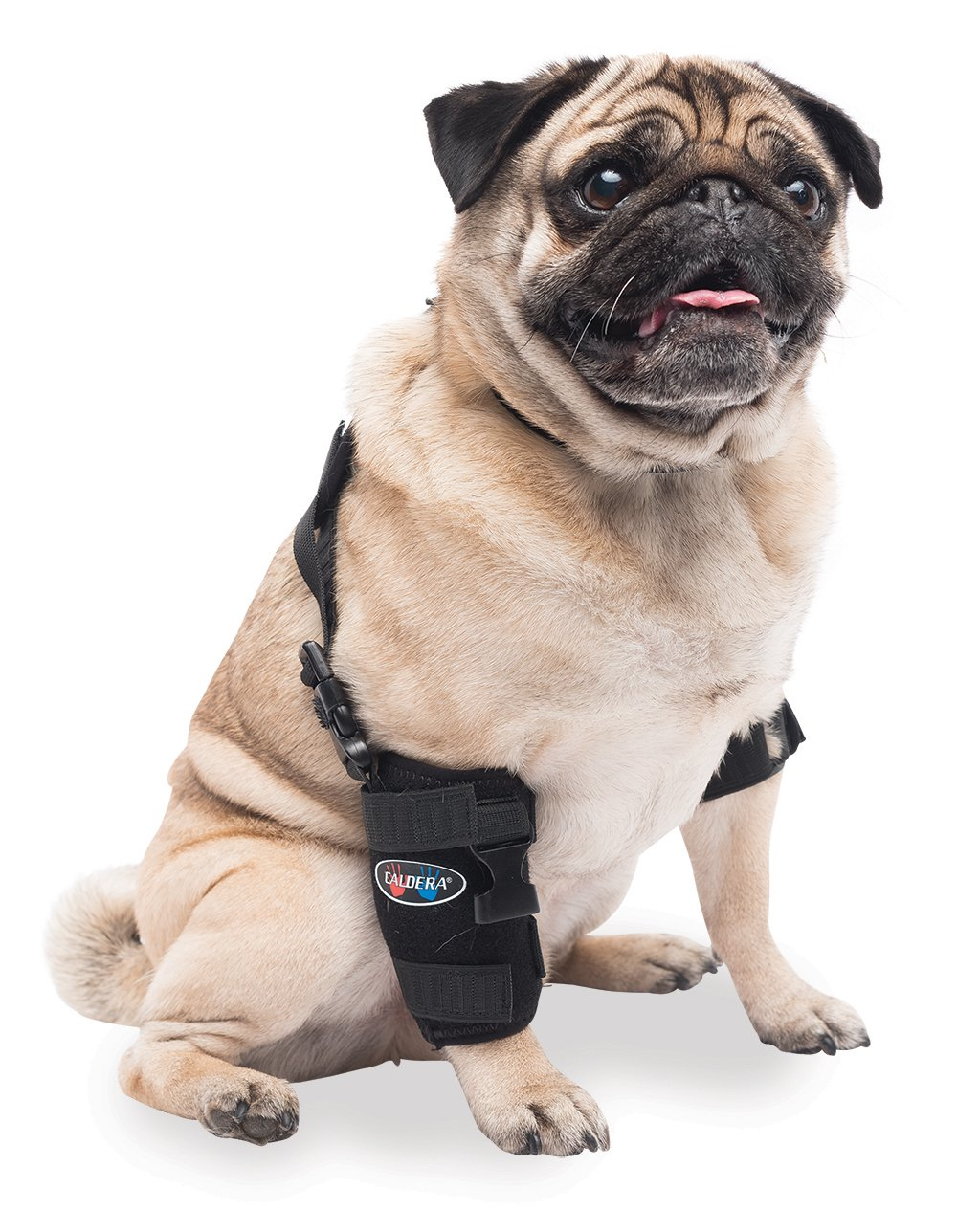 Caldera Pet Therapy Universal Wrap Carpal/Elbow with Gel, Small, Black