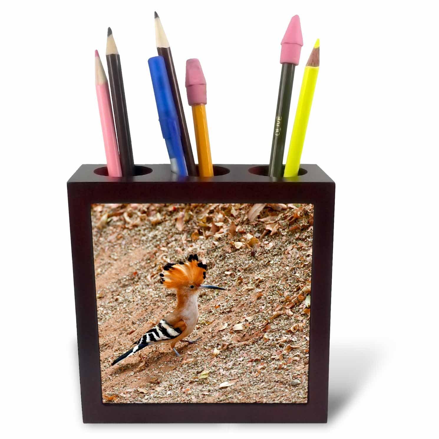 Endemic Bird-AF24 CSL0021-Charles Sleicher-Tile Pen Holder 3dRose ph/_70414/_1 Madagascar Madagascar Hoopoe 5-Inch
