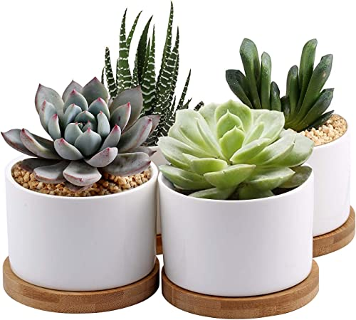 Zoutog Succulent Planter White Mini 3 15 Inch Ceramic Flower Planter Pot With Bamboo Tray Pack Of 4 Plants Not Included Home Kitchen