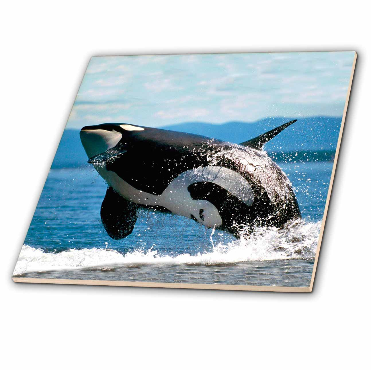 3drose Ct 2545 4 Killer Whale Airbourne Ceramic Tile 12 Inch Tools Home Improvement Building Materials