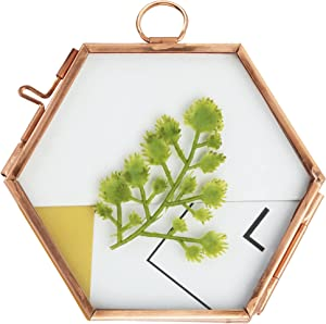 Hanging Glass Frame for Pressed Flowers, Small Hexagon Frame Dried Flowers Glass Brass Frame Wall Decor Display for Plant Specimen Pressed Flowers …