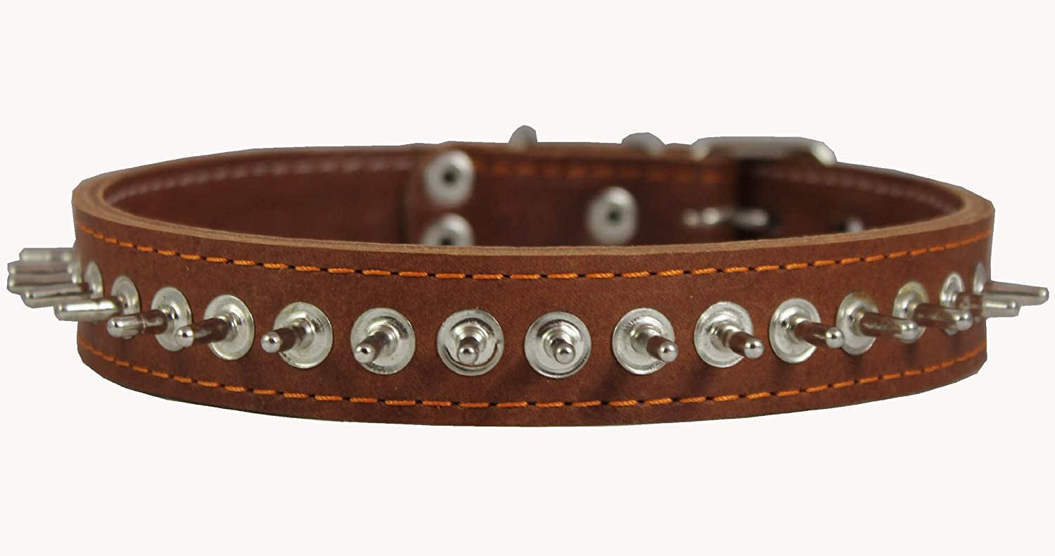 1  Wide Thick Latigo Leather Spiked Dog Collar Tan Sized to Fit 17 -21  Neck Akita, Husky