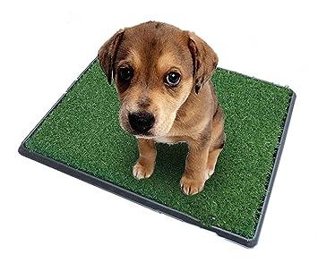 topiaukstore cachorro para inodoro perro hierba baño Potty Training con bandeja y Loo Pad