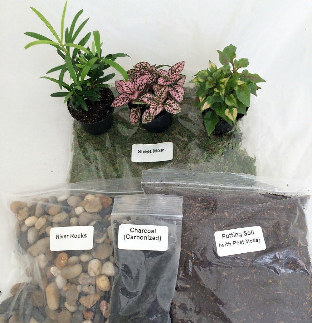 Terrarium/fairy Garden Kit / with Bird's Nest +3 Plants - Create Your Own Living Terrarium From Jmbamboo