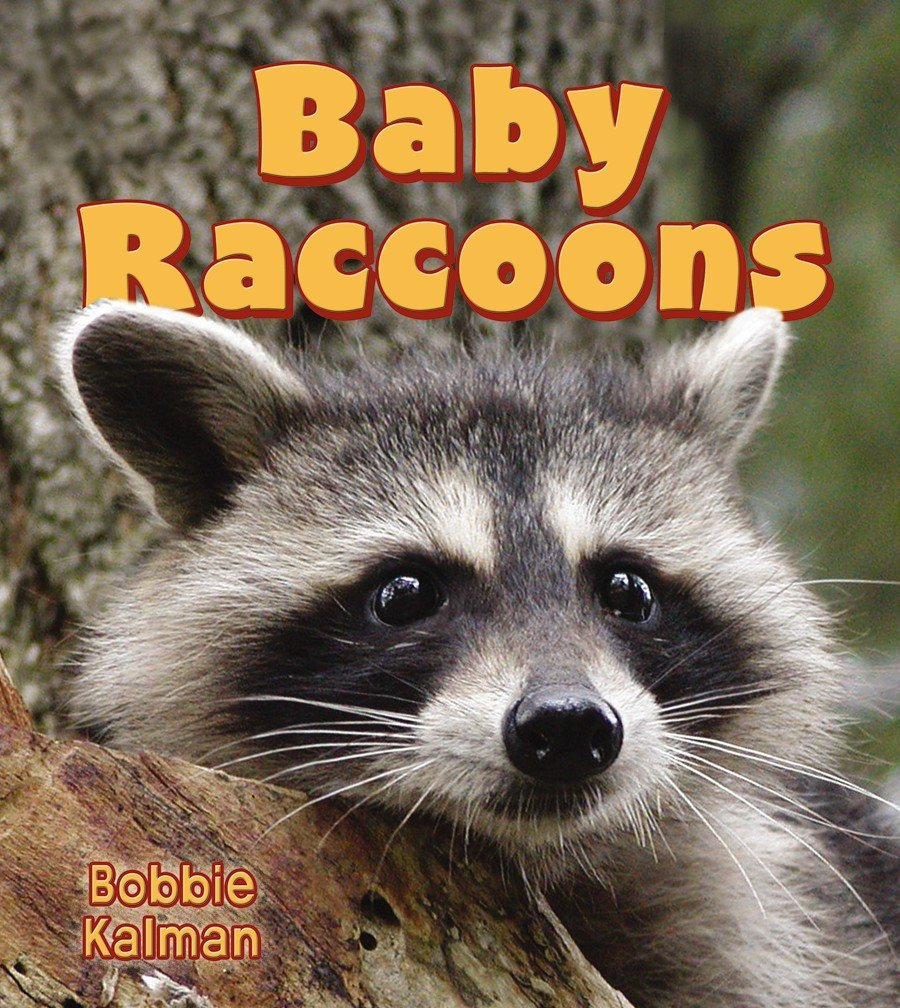 baby raccoons it u0027s fun to learn about baby animals paperback