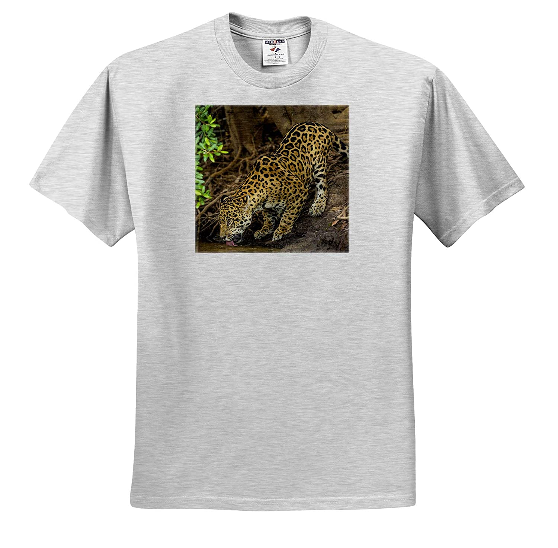 ts/_314063 - Adult T-Shirt XL 3dRose Danita Delimont Pantanal Brazil Wild Jaguar Drinking Jaguars