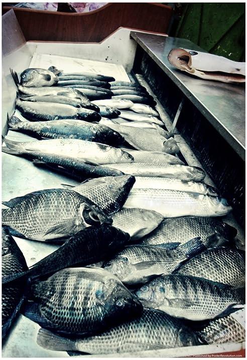 Laminated Tokyo Fish Market Poster 13 X 19in