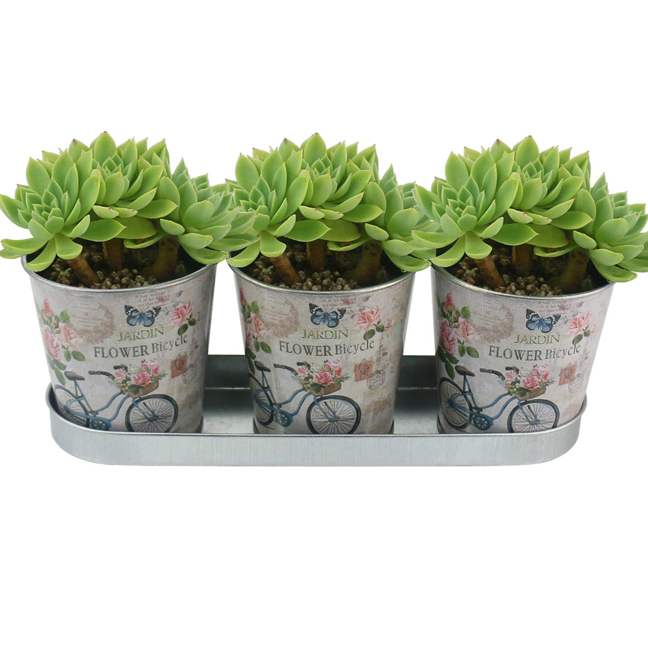 "Ogrmar 3 Buckets 3.9"" Silverware Picnic Caddy/Succulent Planter Metal Pots/Silverware Flatware Caddy Organizer/Farmhouse Decor/Office supplies study article organizer with Tray (Bicycle L)"