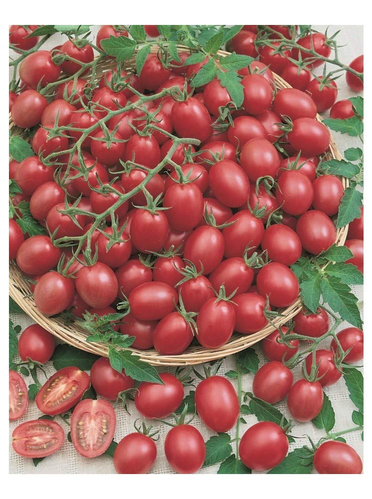 PREMIER SEEDS DIRECT Tomato Cherry - Pink Grape - 100 Finest Seeds