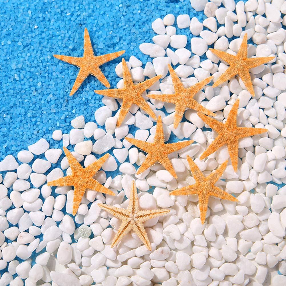 /2,5/cm 100/pezzi SUPVOX stelle marine naturali Vere decorazione Stella Marina Maritime Micro Paesaggio Acquario Ornament 1/