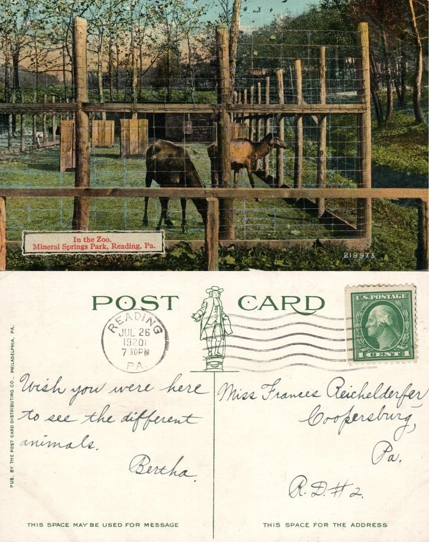 Amazon com : READING PA MINERAL SPRING PARK ZOO 1920 ANTIQUE