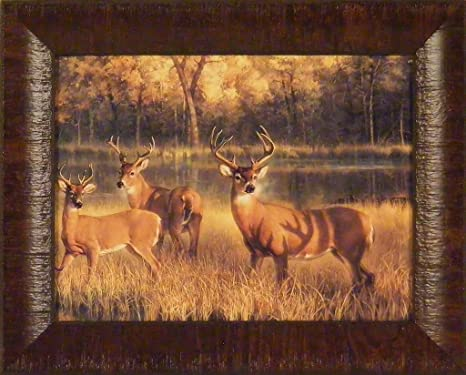Shadow Time By Nancy Glazier 12x15 Whitetail Deer Bucks Antlers Framed Art Print Wall Décor Picture Whitetail Deer Decor Posters Prints