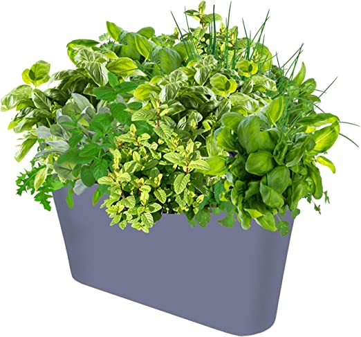 savvygrow Ergo Planter – Maceta decorativa de recipiente amplio ...