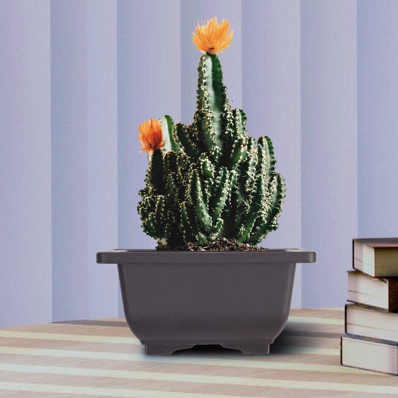 WIVARRA 15 PCS 4.7 인치 화분 광장 플라스틱 분재 훈련 냄비 꽃 즙이 많은 화분 용기 정원 인테리어 가정 장식