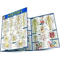 Anatomy (Quickstudy Academic)
