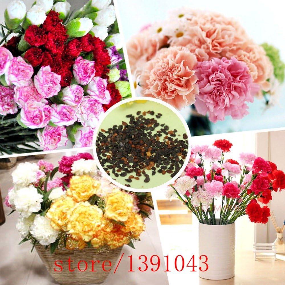 Pinkdose 200pcs semillas del clavel, semillas de flores mixtas bonsai clavel, Mom regalos, floristas flor jardín perfumado, plantas para el hogar & amp; jardín: Amazon.es: Jardín