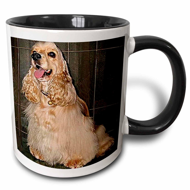11 oz Black//White 3dRose mug/_714/_4Cocker Spaniel Two Tone black Mug