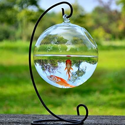 Amazon New Hanging Glass Fish Tank Transparent Spherical Fish