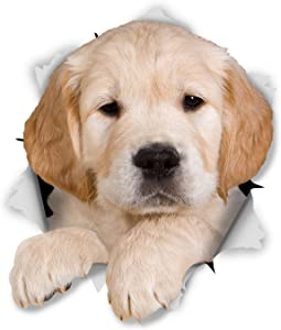 Winston & Bear 3D Dog Stickers - 2 Pack - Golden Retriever Puppy Stickers for Wall, Fridge, Toilet, Room - Retail Packaged Golden Retriever Dog Wall Decals