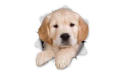Winston Bear Adesivi Da Parete Cucciolo Golden Retriever Adesivi