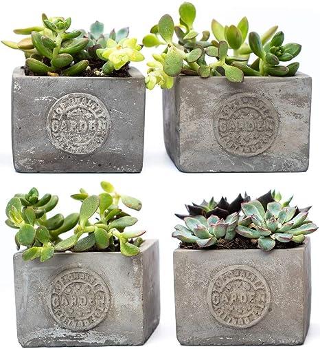 Amazon Com Succulent Planter Small Concrete Garden Pot 3 25 X
