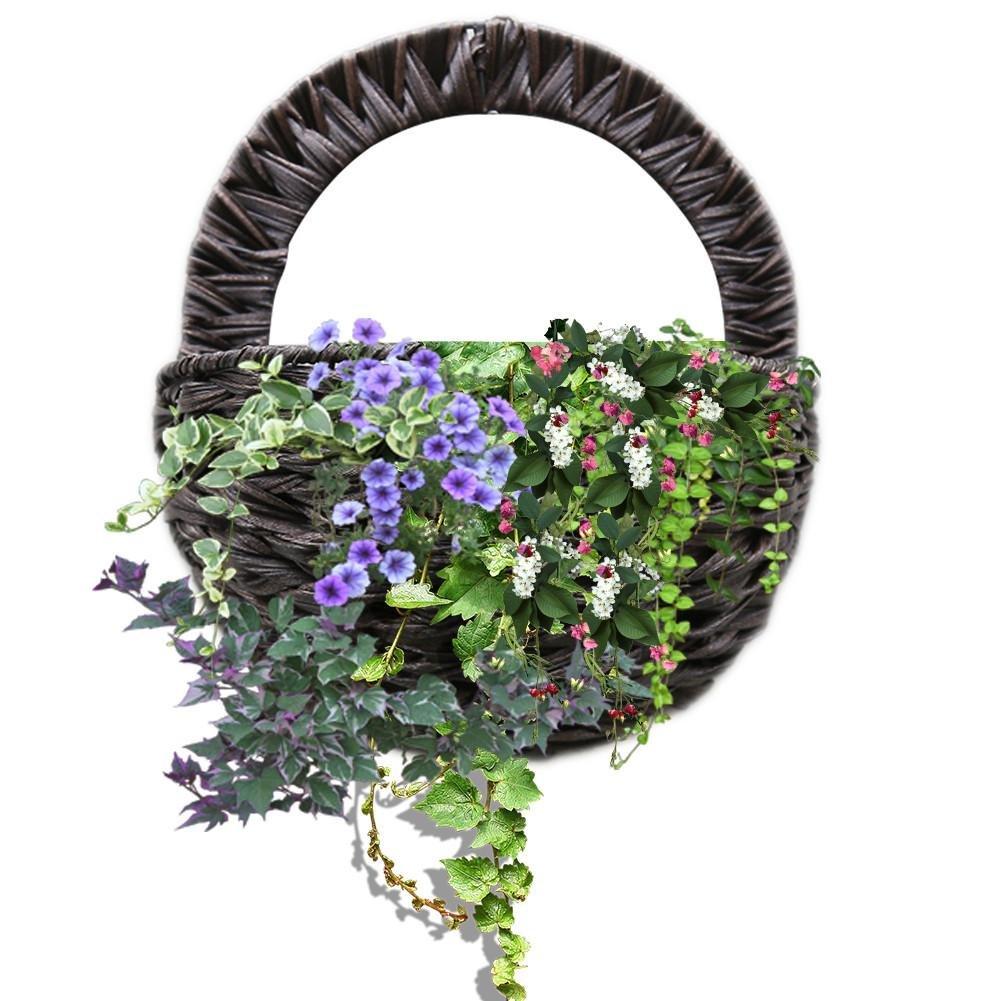 Herba Organica Cinquefoil Rhizome//Potentille Des Marais Rhizome//Comarum palustre L//Herbal Tea 50g
