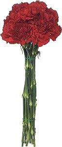 Floral, Cut Flower Carnation Spray Whole Trade Guarantee, 10 Stem