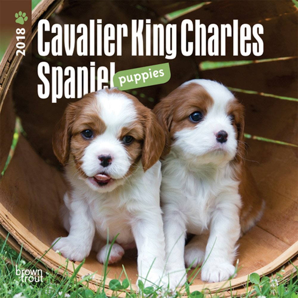 Read Online Cavalier King Charles Spaniel Puppies 2018 7 x 7 Inch Monthly Mini Wall Calendar, Animals Dog Breeds Puppies (Multilingual Edition) pdf