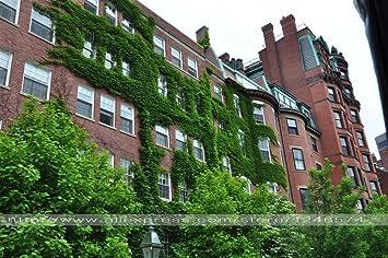 Semillas de Boston Ivy 20pcs / Parthenocissus tricuspidata para DIY Hogar y jardín al aire libre