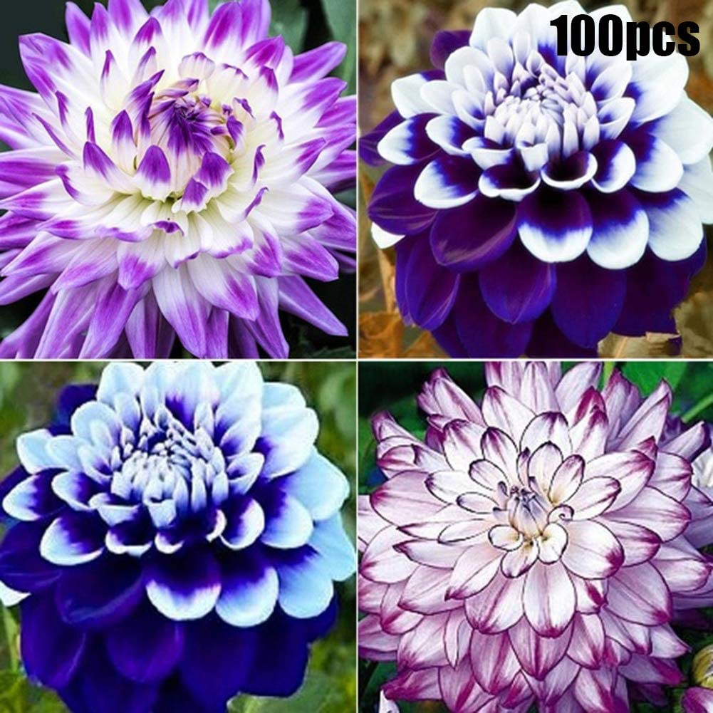 100PCS MIXED COLOR HIBISCUS FLOWER SEED POTTED PLANT GARDEN BONSAI BALCONY DECOR