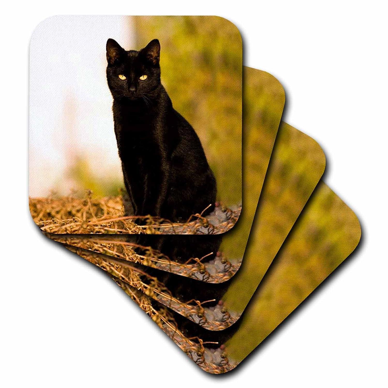 3dRose cst/_3163/_4 Black Cat Ceramic Tile Coasters Set of 8