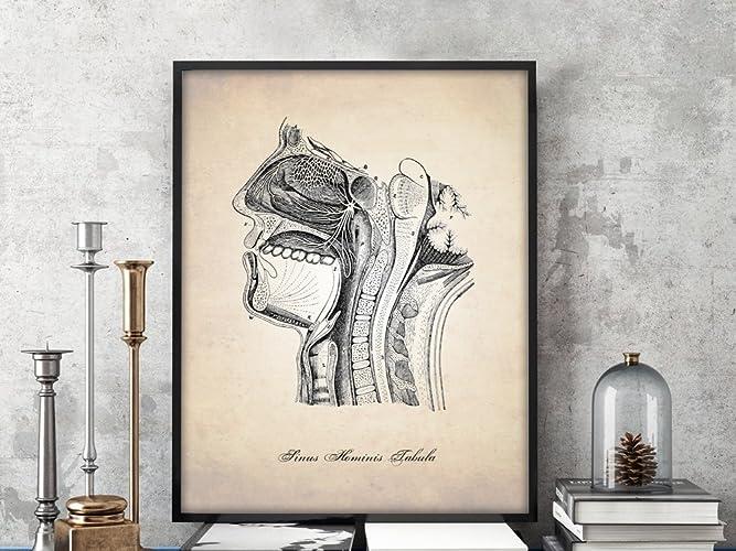 Amazon Sinus Diagram Human Anatomy Art Print Human Anatomy