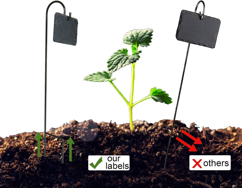 Fendio 10 juegos de etiquetas para plantas, 2.75 pulgadas x 3.84 ...