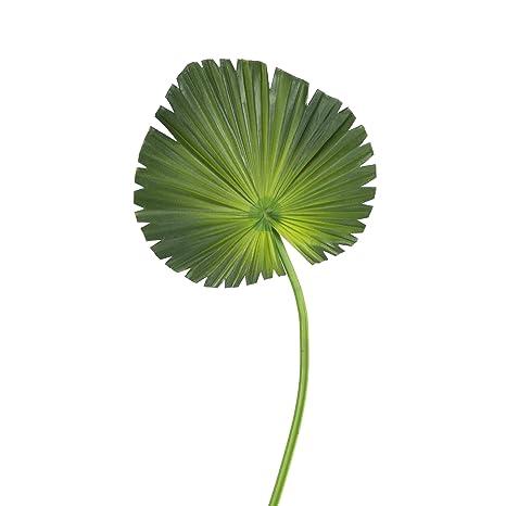 Fronda Muebles De Jardin.Artplants De Hoja De Palma Ventilador Artificial O 20cm