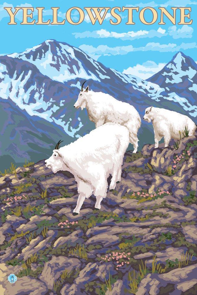 Mountain Goatsシーン – イエローストーン国立公園 16 x 24 Signed Art Print LANT-13746-709 B00N5CT2CM  16 x 24 Signed Art Print