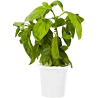Click & Grow Recharge pour Jardinière Click & Grow Smart Herb Garden
