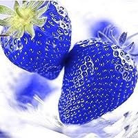 FastDirect Semillas de Fresas Frutales Ecologicas Bonsai Multicolor