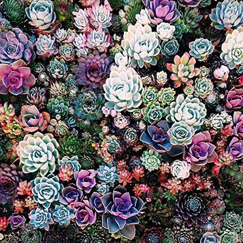 200pcs-mix-succulent-seeds-lithops-pseudotruncatella-bonsai-plants-seeds-for-home-garden