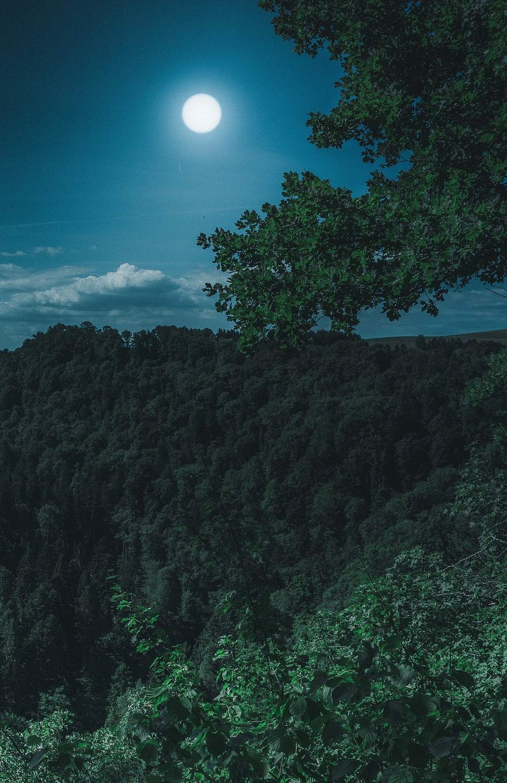 The Hacker-Proof Internet Address Password Book - Forest Moon