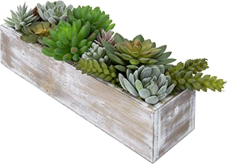 12 inch Succulent Bowl  gorgeous