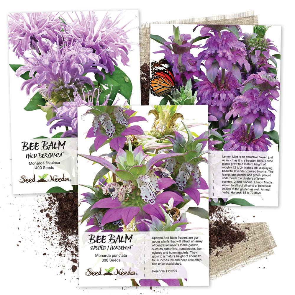 Untreated Seeds Bee Balm Seed Collection 3 Individual Packets Seed Needs