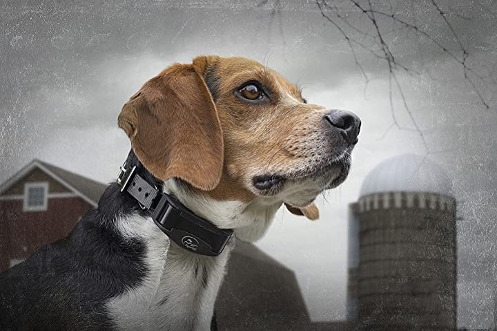 sportdog-brand-nobark-10r-bark-control-collar-review